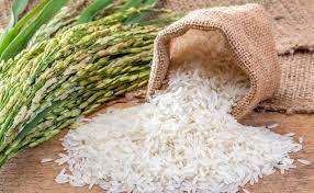 Lúa gạo Hữu cơ